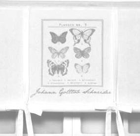 Hissgardin Butterfly Svart