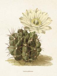 Gammaldags liten plansch skolplansch växter Kaktus shabby chic lantlig stil