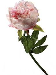 Rosa Pion konstväxt shabby chic lantlig stil